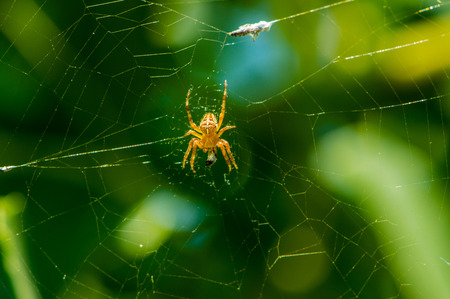 arachnids: The spider in its web Stock Photo