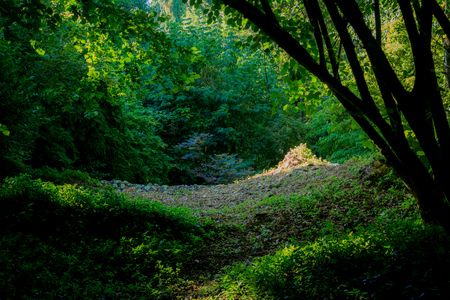 natures: Light games in wildlife, in the nymph garden