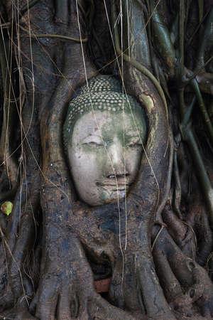 cabeza de buda: El Buda en el árbol