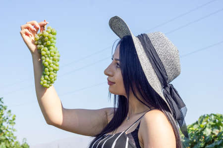 pretty young woman picking grapes in vineyard Stock Photo