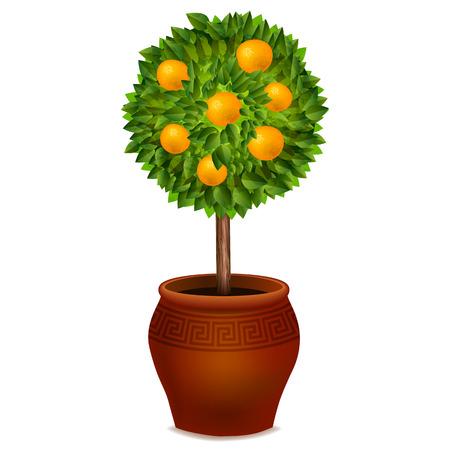 Orange arbre dans un pot isolé sur fond blanc