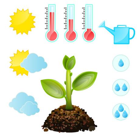 Groeiende en voorwaarden van de planten, het symbool in te stellen. Geà ¯ soleerd op witte achtergrond