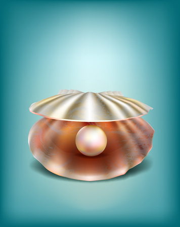 pearl shell: Naturalistic shell with a pearl