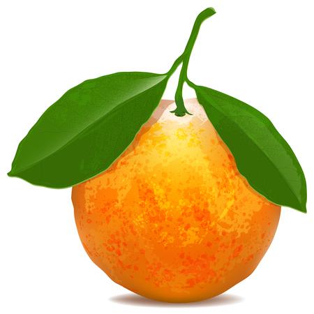 naranjas: Mandarina con hojas aisladas sobre fondo blanco. Dibujo digital Vectores