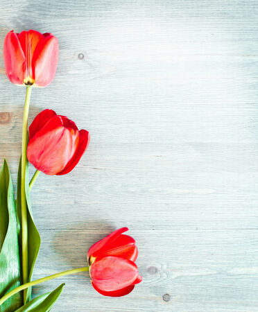 Three red tulips on a wooden texture photo