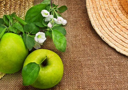 Green apples and apple blossom branches on a canvas background photo