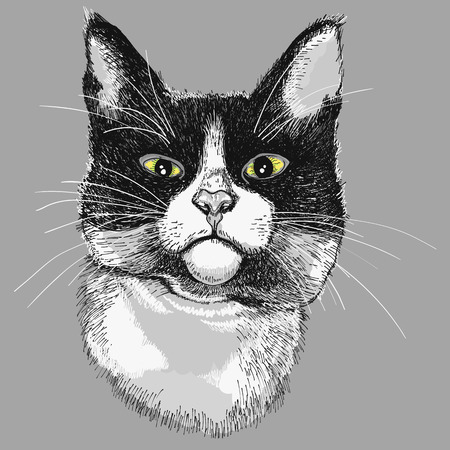 Portrait of a black and white cat  illustration Illustration