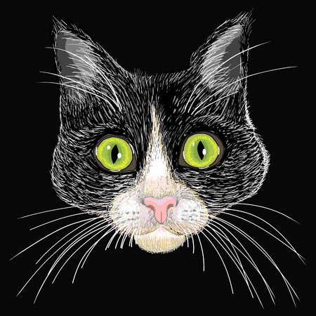 Portrait of a black and white cat with big green eyes  Illustration