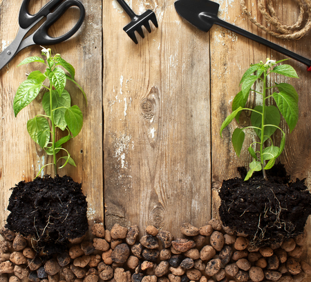 Frame with garden tools and pepper seedlings photo