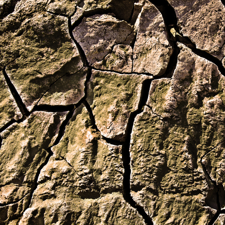 Close up of the cracked ground cover with moss. Texture for background Stok Fotoğraf