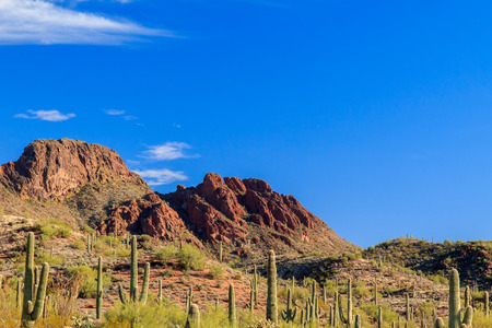 saguaro cactus: Giant Saguaro cactus dot the landscape leading to the rugged, rocky outcrop of Vulture Peak, Arizona.