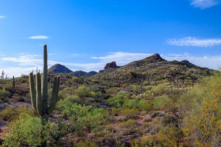 carnegiea: Saguaro Cactus, Sonoran Desert Panorama