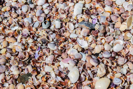 carpeting: Colorful array of seashells carpeting the beach in Ao Nang, Thailand. Stock Photo