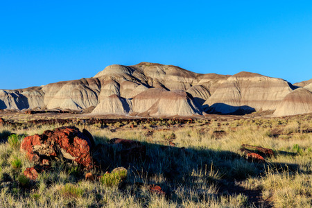 fossilized: Ancient fossilized trees litter landscape of the Petrified Forest. Stock Photo