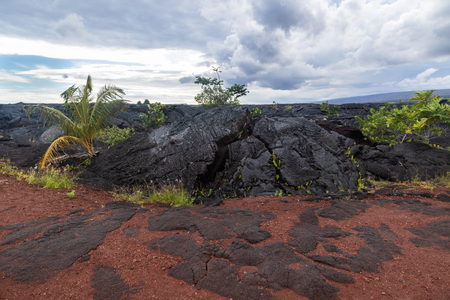 Outcrop of dark pahoehoe lava, in lava field on Hawaii's Big Island. Surrounded by green tropical plants regrowing in the area, with a mix of red and black volcanic rocks. Storm clouds overhead.
