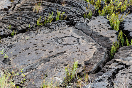 Petroglyphs  at Pu'uloa (Long Hill) along the Chain of Craters road, in volcano National Park on the island of Hawaii. The drawings are 400-700 years old.