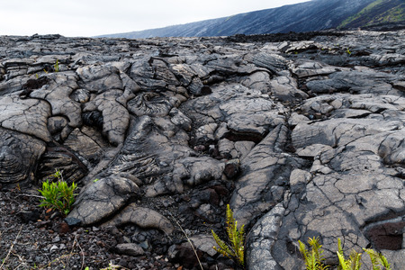 View of massive pahoehoe lava flow in Volcano National Park, on Hawaii's Big Island. Plants are starting to regrow in the foreground.