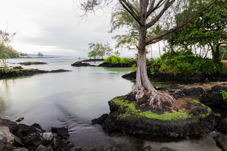 Tranquil inlet at Hawaiian beach in Hilo, Hawaii. Tree standing on protrucing rock; rocky outcrops and vegetation in background. Clear pool leads towards the ocean.