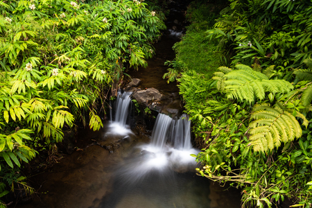 Stream and small waterfall cascading into a crystal clear pool, in Akaka falls state park near Hilo on Hawaii's Big Island. Ferns and other lush Rainforest plants cover both banks. 写真素材