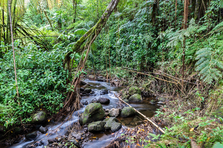 Stream running through tropical rainforest, in Akaka Falls State Park, Hilo, on Hawaiis Big Island. Rocks in stream; bamboo, ferns, vines and other jungle plants.