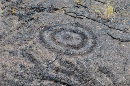 Petroglyphs  at Puuloa (Long Hill) along the Chain of Craters road, in volcano National Park on the island of Hawaii. Sacred site to many native families, it is the largest array of petroglyphs in Hawaii. The drawings are 400-700 years old.