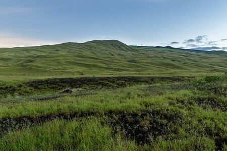 Rolling green hills, covered with grass at dawn on Hawaii's Big Island.
