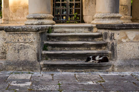 cat island: Cat sleeping in stairs Corfu island Greece Stock Photo