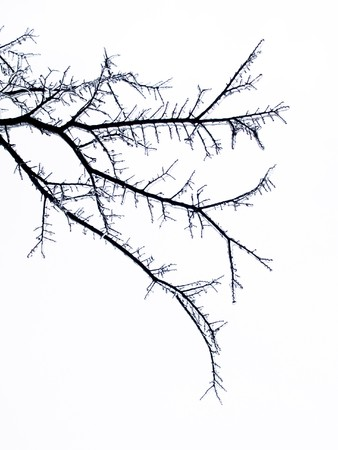icescape: Frozen tree limb encased in ice abstract background.