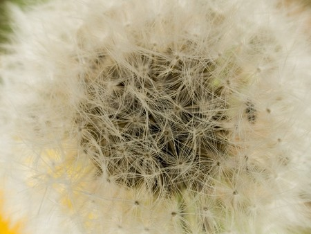 layer mask: Stock macro photo of the texture of the surface of a dandelion puffball.