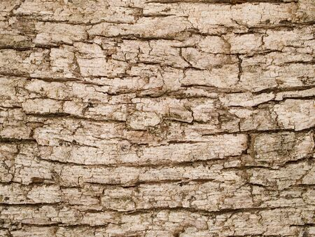 layer masks: Stock macro photo of the texture of tree bark.  Useful for backgrounds and layer masks. Stock Photo