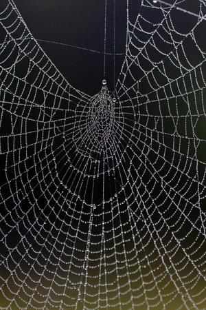 An elaborate spider web filled with a multitude of small dew droplets on a misty morning.  photo