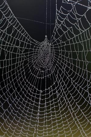 Une toile d'araignée complexe rempli d'une multitude de petites gouttelettes de rosée sur un matin brumeux. Banque d'images - 11620980