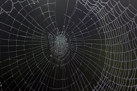 elaborate: An elaborate spider web filled with a multitude of small dew droplets on a misty morning.
