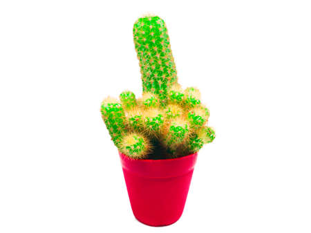 The cactus is in a red pot isolated on white background