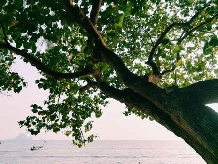 The tree extends to the sea.