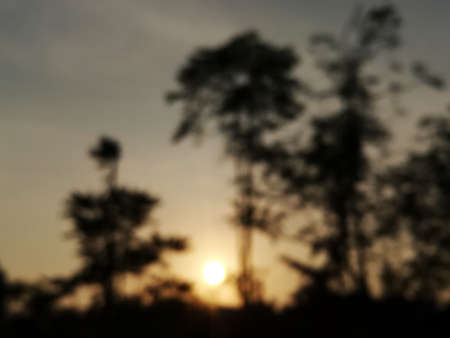 First light of day.Blurred silhouette of tree in the morning.Blurred background.