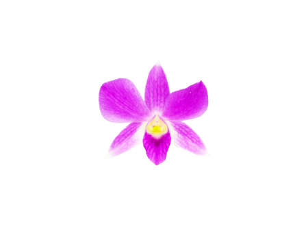 Violet orchid flower ,isolated on white background.