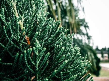 Christmas tree before christmas festival.