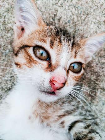 Face of cat.