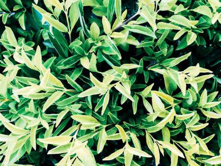 Leaves greenery background. Stock Photo