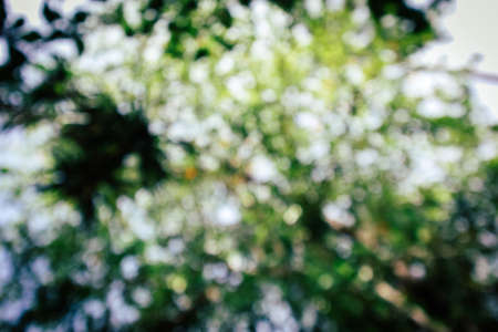 Under view green leaves bokeh.Green nature blurred background concept.