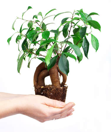 Small tree in a hand on white Stock Photo - 17060910