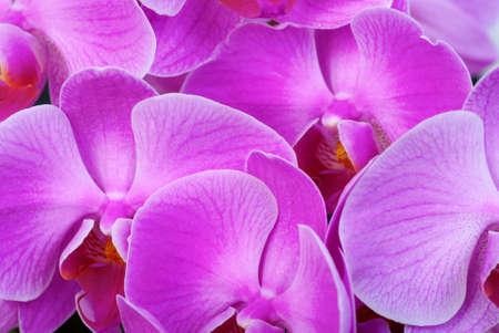 orchidea: orchidea texture