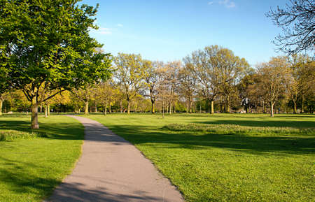Green Grass in the Park photo