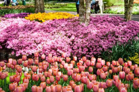 keukenhof: KEUKENHOF GARDEN NETHERLANDS. Keukenhof is the worlds largest flower garden. Keukenhof Garden Lisse Netherlands