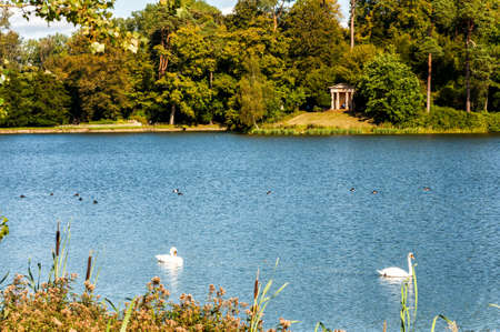 Lake in the summer park. Birds on the lake.