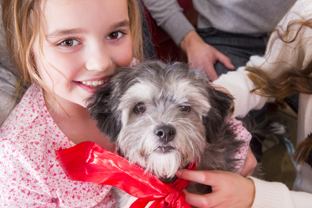 little girl child: Little Girl with New Puppy. She is smiling at the Camera and the Small Grey Dog has a Ribbon around its Neck. Stock Photo