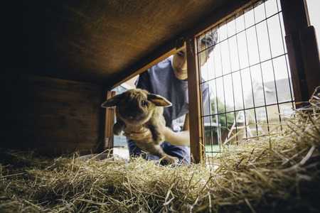 the hutch: Pet rabbit being put back into its hutch by a teenage boy. Stock Photo
