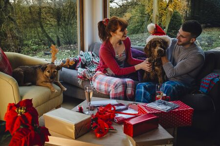 cocker: Couple with their dogs at Christmas time.  Stock Photo