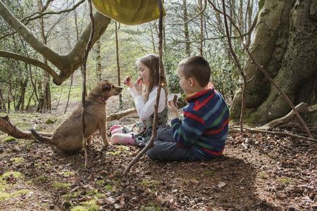 숲에서 피크닉을하는 아이들. 그들은 초콜릿 바를 먹으며 애완용 개의 개가 탐욕 스러울 정도로 가까이 앉아 있습니다. 스톡 콘텐츠
